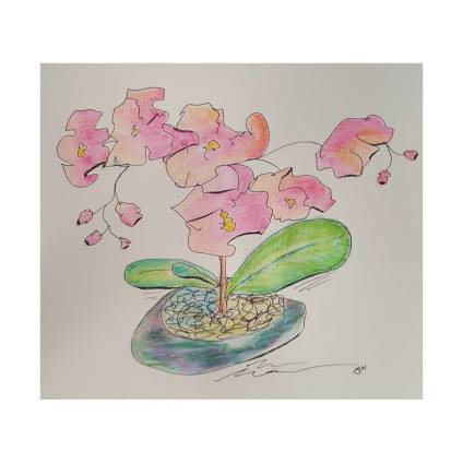 orchids_featured