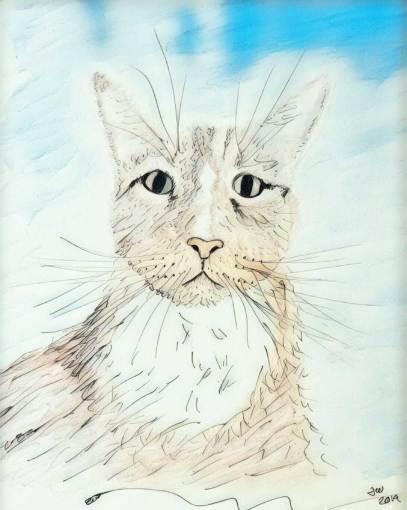 tommycat